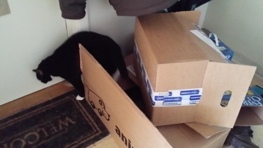 Men vadjam nu då? Kan inte en stackars katt få sova ifred?