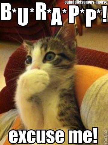 burping cat