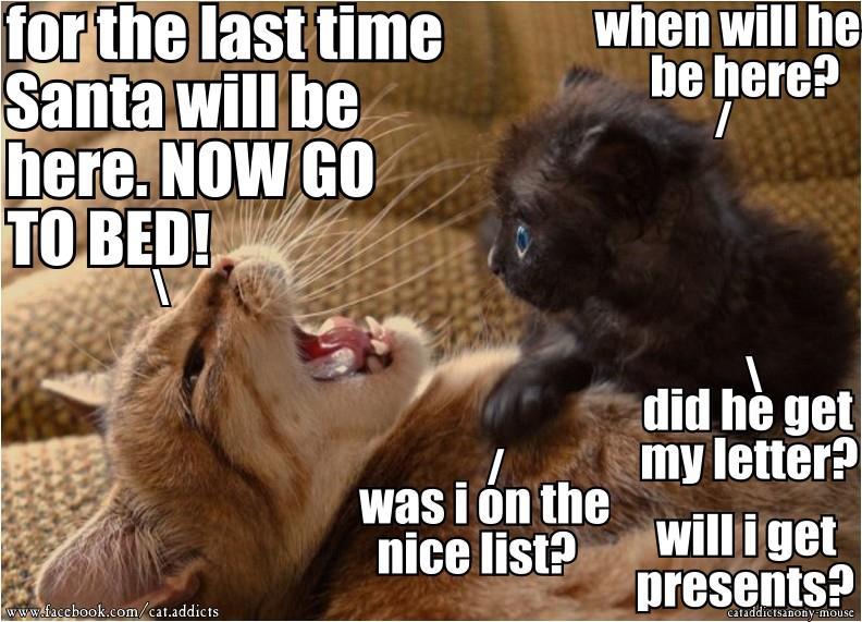 Kitten asks for Santa