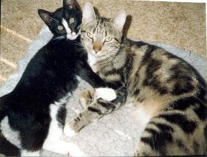 Sippo och Elvis kramas. Sista natten tillsamman.