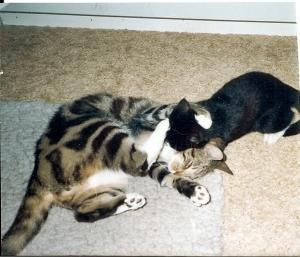 Sippo och Elvis busar.