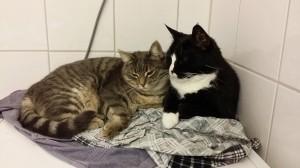 Sippo och Viska ligger och myser på tvättmaskinen tillsammans.