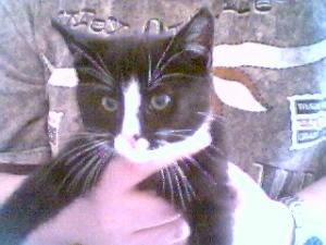Liten Sippo, när han var nyinflyttad hos mig och Elvis 2001.